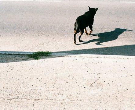 Фотопроекты читателей: снимки Александры Корзун