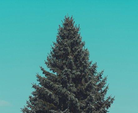 Одежда, подарки и елки с глинтвейном. 9 новогодних маркетов в Минске