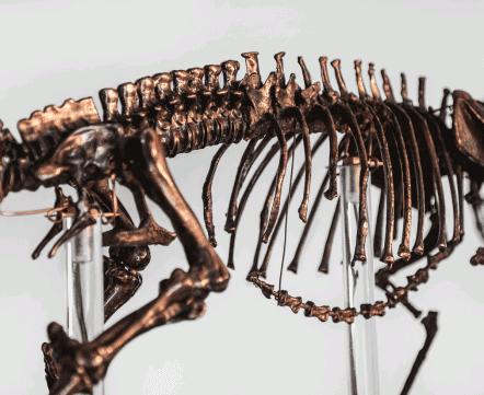 «Классе в шестом я нашел скелет собаки». Учитель делает скульптуры из металлолома