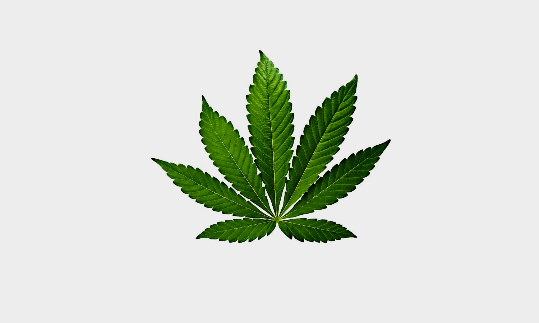 О марихуане в ведах крем для загара в солярии с коноплей