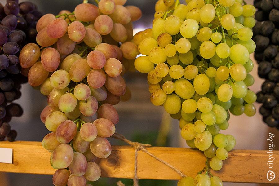 Красные и белые сорта виноградных лоз выращиваемых во Франции