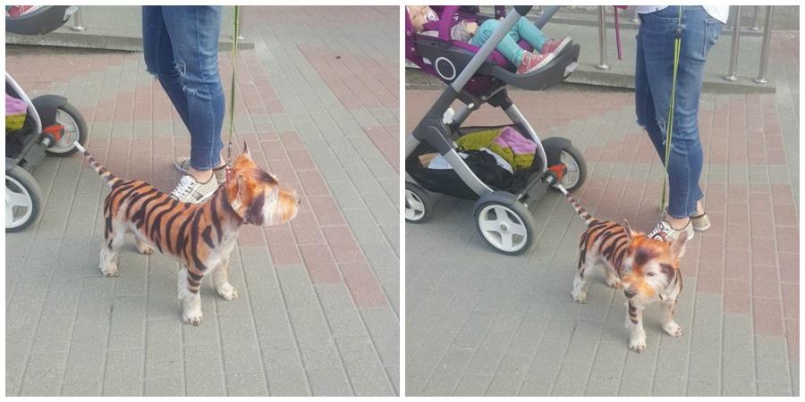 Собака и кот минск